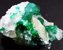 68.3 CTS DIOPTASE SPECIMEN-EMERALD GREEN ST8430]