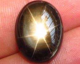 16.81 Carat Black Star Sapphire - Gorgeous Gem