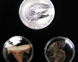 Silver Salt Crocodile with Ammonite & Shark tooth CC126