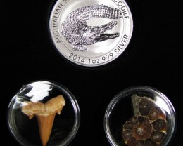 Silver Salt Crocodile with Ammonite & Shark tooth CC121