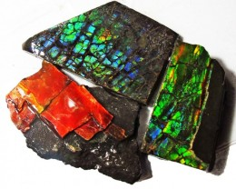 55.62 CTS AMMOLITE  ROUGH PARCEL SPECIMEN FROM CANADA  F5173