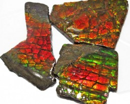 41.37 CTS AMMOLITE  ROUGH PARCEL SPECIMEN FROM CANADA  F5191-4