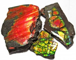 64.64 CTS AMMOLITE  ROUGH PARCEL SPECIMEN FROM CANADA  F5212