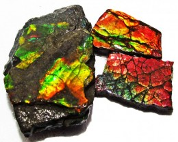 36.11 CTS AMMOLITE  ROUGH PARCEL SPECIMEN FROM CANADA  F5217