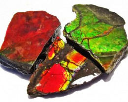 42.49 CTS AMMOLITE  ROUGH PARCEL SPECIMEN FROM CANADA  F5233