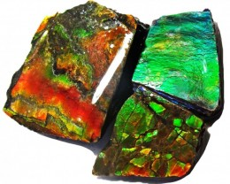 27.67 CTS AMMOLITE  ROUGH PARCEL SPECIMEN FROM CANADA  F5239