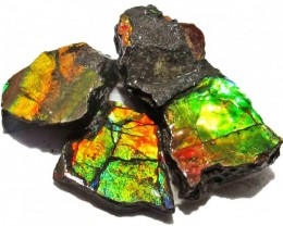 34.40 CTS AMMOLITE  ROUGH PARCEL SPECIMEN FROM CANADA  F5242