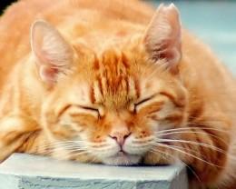 Cat recharging.