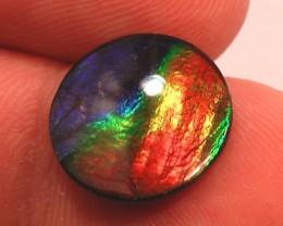 TOP QUALITY LARGE RAINBOW Natural Ammolite Gem Quartz Capped