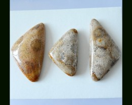 3 PCS Indonesian Coral Fossil Cabochons,168.75Cts