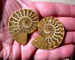 VERY NICE NATURAL AMMONITE SPLIT 48MM