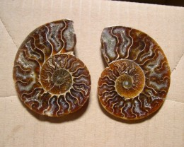 VERY NICE AMMONITE SPLIT 72mm