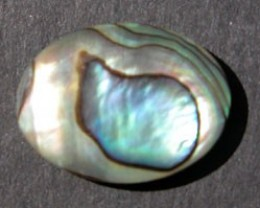 YOWAHOPALS+4.20ct Paua Shell - New Zealand -