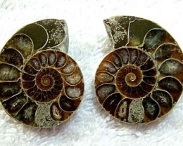 (MGW) SPECIMEN OF AMMONITE CHELINOCERAS 105 CTS FP 288