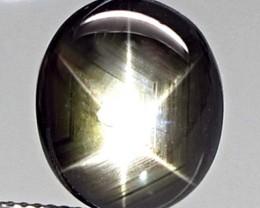 9.01 Carat Thailand Black Star Sapphire - Gorgeous