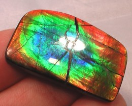 'BIG' AWESOME BRIGHT NEON COLOR Natural Ammolite Gem FLASHY