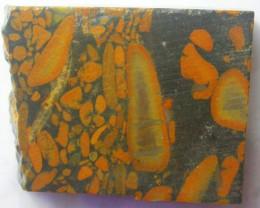 145.0 CTS BAMBOO JASPER -CHINA [F6221]