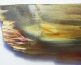 305.0 CTS WOOD FOSSIL SLAB UTAH [F6184]