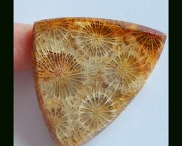 Wholesale 43 Cts Natural Coral Fossil Cabochon Untreated Gemstone