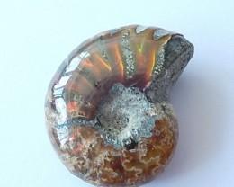 32.5Cts  Natural Ammonite gemstone Fossil shells pendant bead