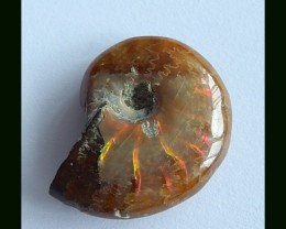 27 Cts Natural Ammonite