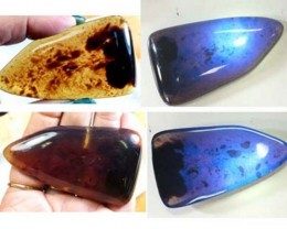 AMBER  INDONESIA  HONEY GOLD TO BLUE 82.40  CTS  TBG-2131 gc