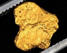 AUSTRALIAN  GOLD NUGGET    LGN 1277