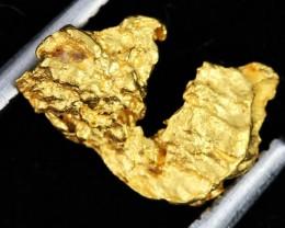 AUSTRALIAN  GOLD NUGGET    LGN 1293