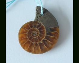 Natural Ammonite Bead For Pendant Design,30x25x5MM,24.5 ct