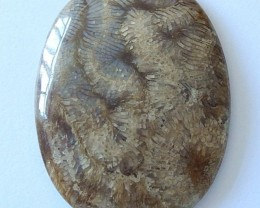 97 Cts Natural Coral Fossil Gemstone Cabochon High Quality