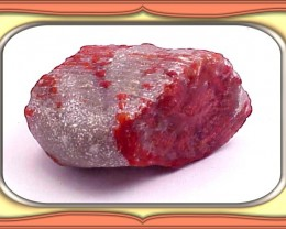 159.0ct  UTAH FOSSILIZED GEM RED HORN CORAL ROUGH *WoW $1NR*
