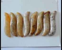 8 PCS Natural Coral Fossil Gemstone Cabochons Parcel