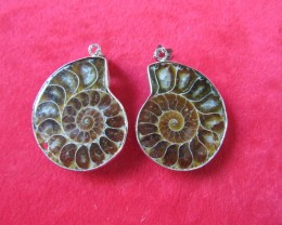 126CTS  TWO AMMONITE PENDANT AGR 720