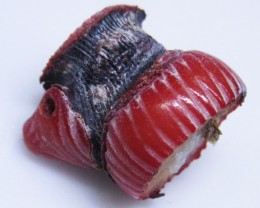 11Cts Natural red coral specimen   BU1718