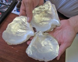 0.33 KILOS  THREE  Natural Broome Shells  BU2031