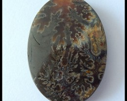 41cts Natural Ammonite Gemstone