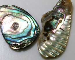 13.60 CTS ABALONE SHELL PARCEL (2PCS) ADG-1231