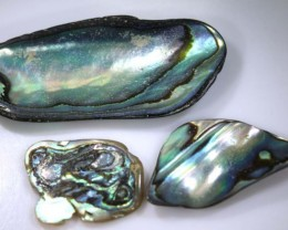 18.95 CTS ABALONE SHELL PARCEL (3PCS) ADG-1364