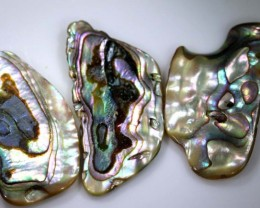 29.95 CTS ABALONE SHELL PARCEL (3PCS) ADG-1365