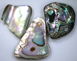 24.65 CTS ABALONE SHELL PARCEL (3PCS) ADG-1366