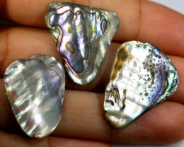 19.55 CTS ABALONE SHELL PARCEL (3PCS) ADG-1425