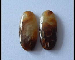 14Ct Natural Ammonite Gemstone Cabochon Pair(C0092)