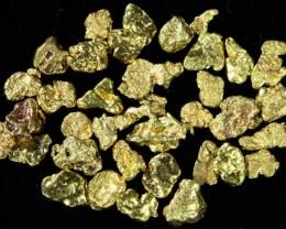 One Gram 14 screen Yukon Gold nuggets LGN 1396