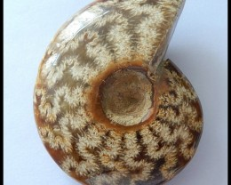 275CT Natural Ammonite Gemstone ,Beautful Ammonite(D0011)