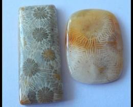 2 PCS Natural Coral Cabochons Beautiful Coral,32ct