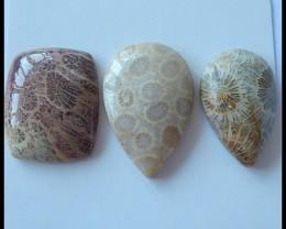 3PCS Natural Coral Cabochons,69.5Cts