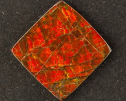 4.50 ct CANADIAN AMMOLITE - MASTER CUT!  UNTREATED!