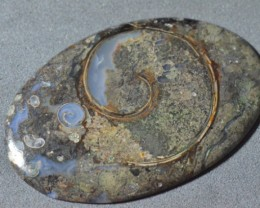 Colus Fossil Agate cabochon AAA oval - mesemerizing!