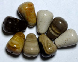 35.95 CTS  (8PC) PETRIFIED WOOD BEADS NP-844