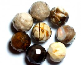 PETRIFIED WOOD BEADS, (8PC) 66CTS NP-810